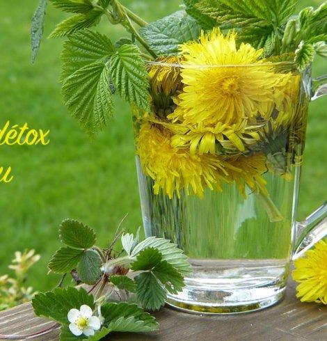 Faire peau neuve avec 4 plantes sauvages du printemps