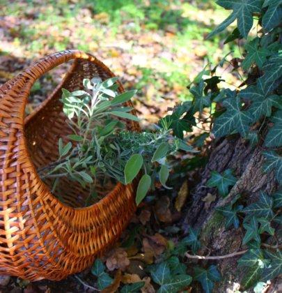 Cueillette de Plantes médicinales: Avant de partir pour le terrain…