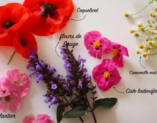 10 plantes sauvages de l'été qui font la beauté et le beau temps… (1ère Partie)