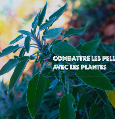 6 Plantes Anti-Pelliculaires à découvrir absolument!