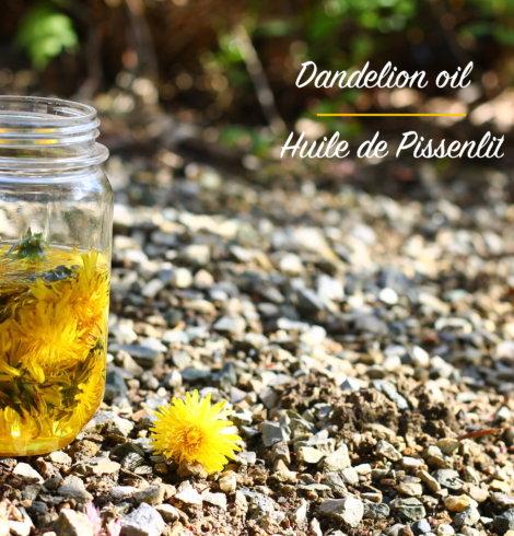 Huile infusée de Pissenlit- Dandelion infused oil