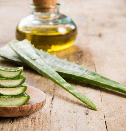 12 bonnes raisons d'utiliser l'Aloe vera au quotidien