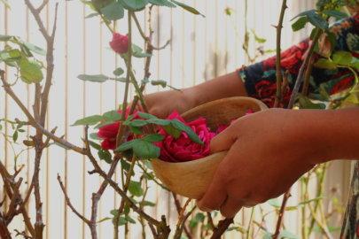 Cultiver l'Amour de Soi avec la Rose
