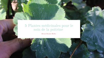 5 plantes à connaître pour l'entretien des Seins
