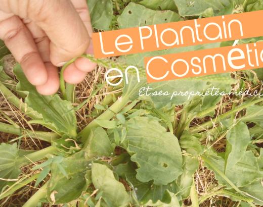 Le Plantain lancéolé et le Grand Plantain: Bienfaits et Usages en cosmétique